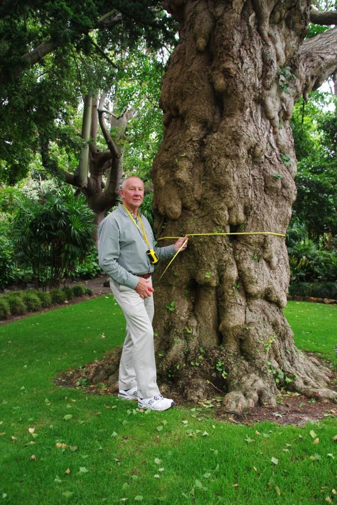 Measuring Our Big Trees Friends Geelong Botanic Gardens