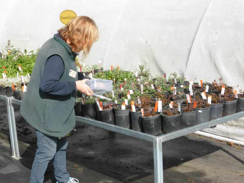 Ground Covers In The Nursery